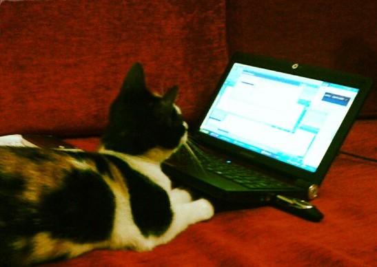 spaz_cat_email