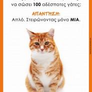 Γατάκια, γατάκια, γατάκια… Συμβουλές