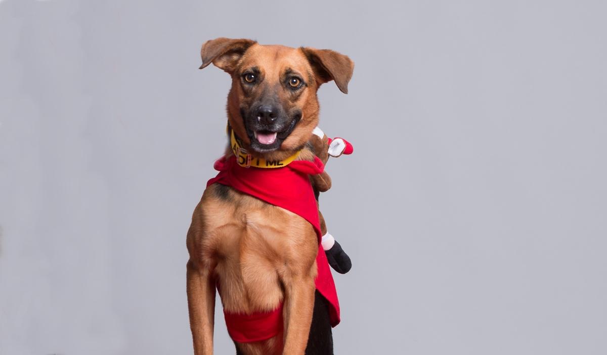 Συμβουλές για Σκύλους